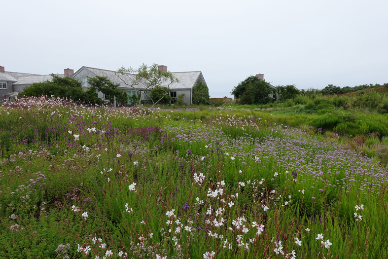 Piet oudolf nantucket island for Piet oudolf serpentine gallery