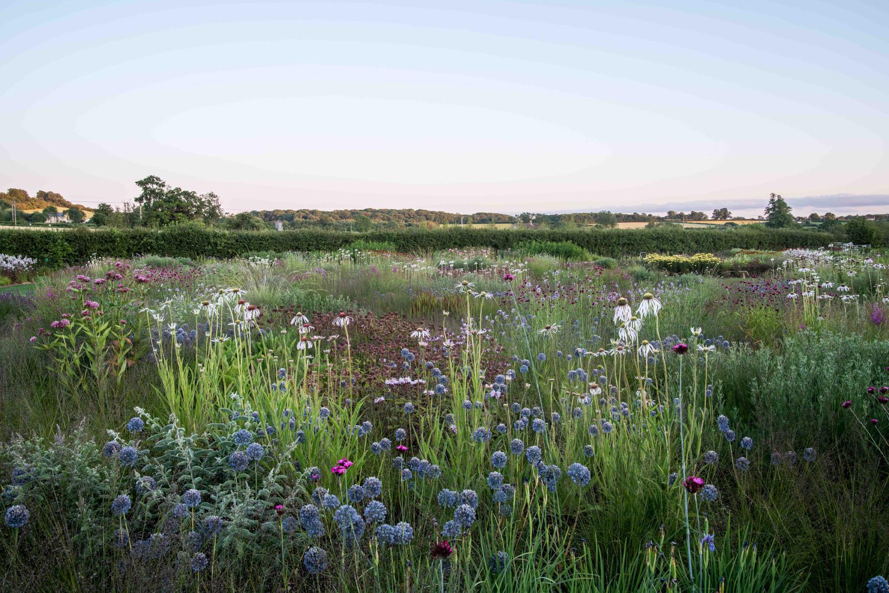 diseñar un jardín con colores