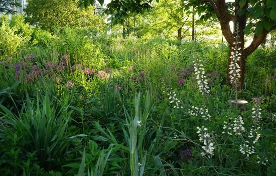 lurie-garden-13
