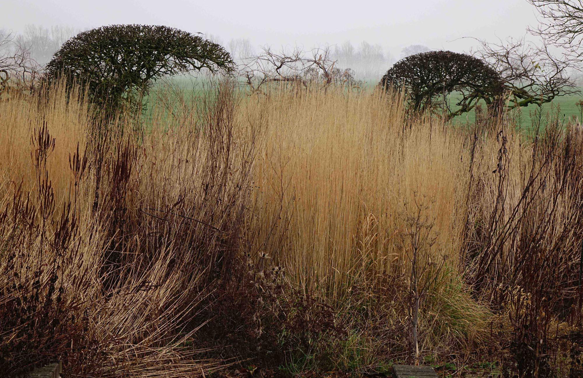 Piet oudolf oudolf hummelo for Piet oudolf pflanzplan