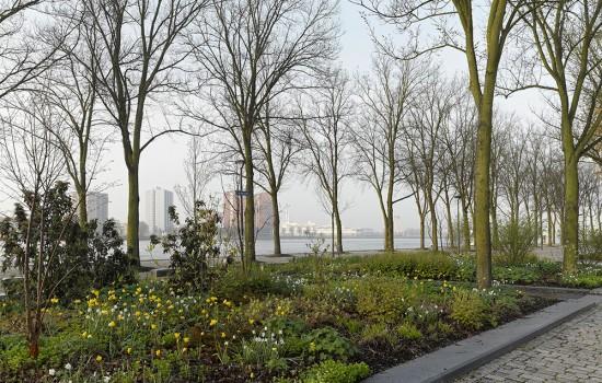 westerkade rotterdam