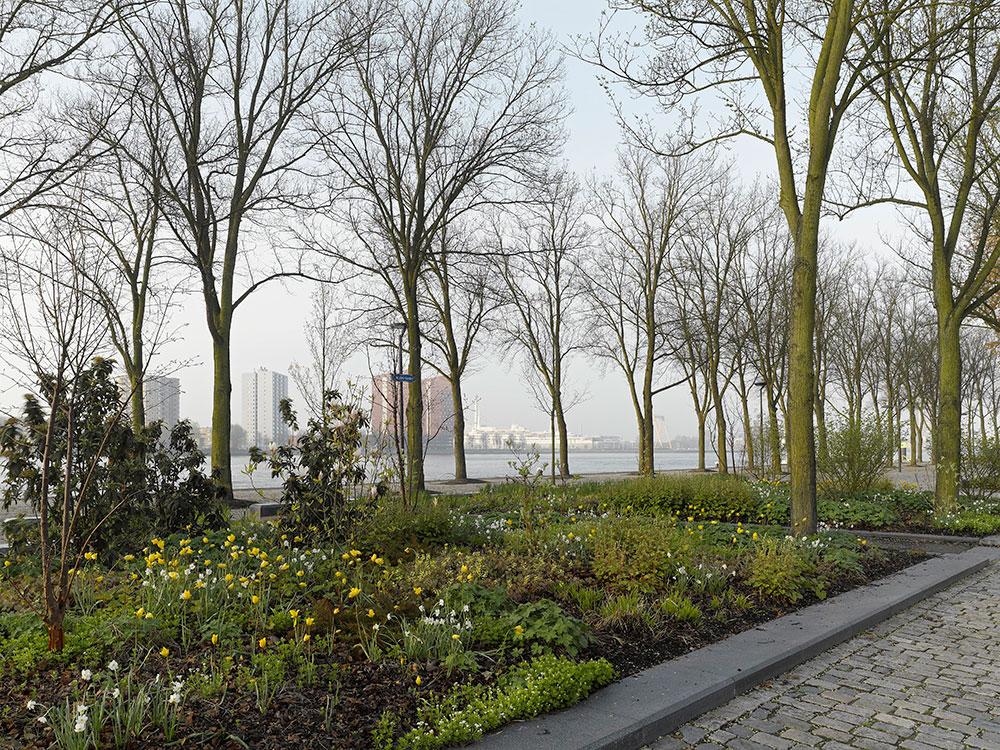 Piet oudolf westerkade for Piet oudolf pflanzplan